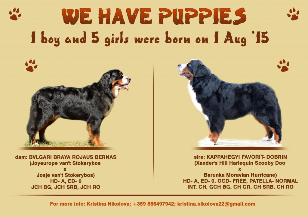 Dobrin & Braya_puppies